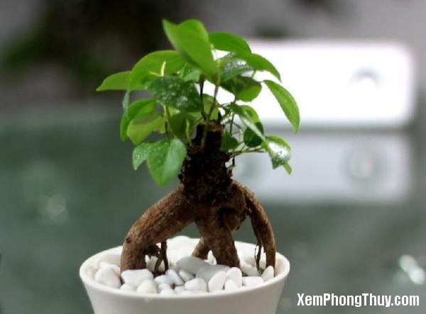 phong_thuy_cho_nguoi_menh_moc_cung_cay_gua