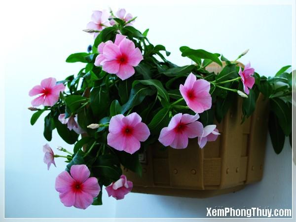 hoa dua can 3 Loại cây được xem là mang lại may mắn cho gia chủ