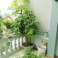 trithucsong.com-hoabtt201181123382076-0
