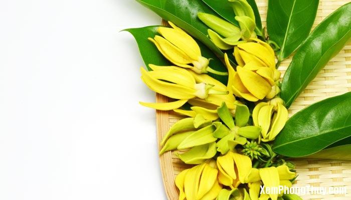 cac loai cay chua benh nen trong trong nha 37401 2 Các loại cây giúp chữa bệnh nên trồng trong nhà