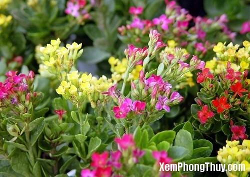 cac loai cay chua benh nen trong trong nha 37401 Các loại cây giúp chữa bệnh nên trồng trong nhà