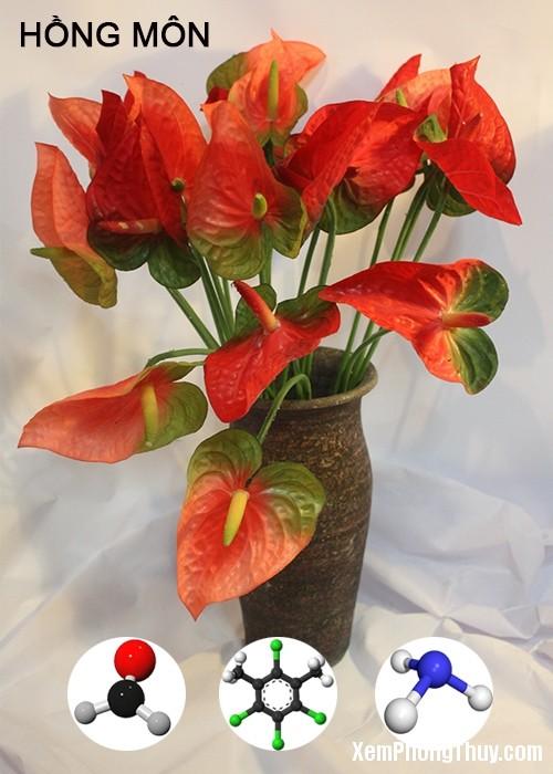 clip image005 2 11 loại cây giúp khử mùi sơn, lọc khí độc tốt nhất NASA khuyên trồng trong nhà