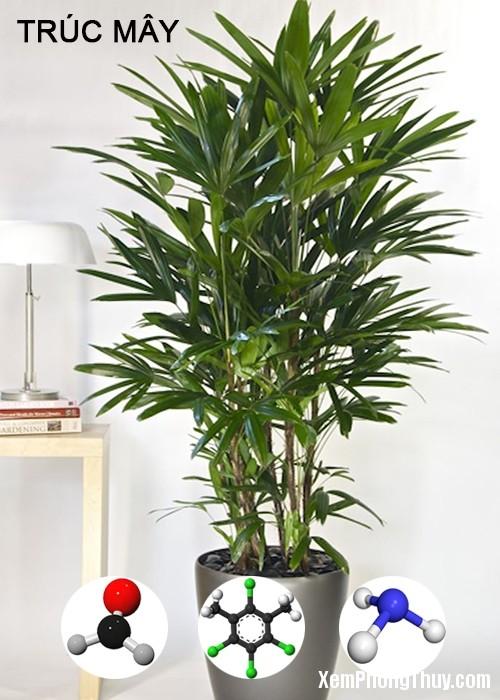 clip image006 1 11 loại cây giúp khử mùi sơn, lọc khí độc tốt nhất NASA khuyên trồng trong nhà