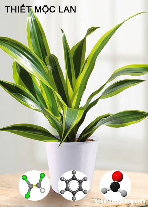clip image008 2 11 loại cây giúp khử mùi sơn, lọc khí độc tốt nhất NASA khuyên trồng trong nhà