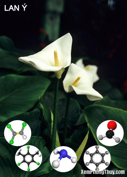 clip image009 2 11 loại cây giúp khử mùi sơn, lọc khí độc tốt nhất NASA khuyên trồng trong nhà