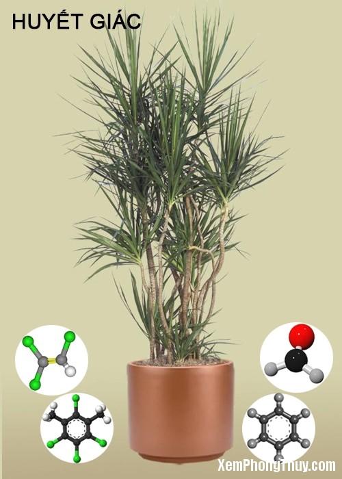 clip image010 2 11 loại cây giúp khử mùi sơn, lọc khí độc tốt nhất NASA khuyên trồng trong nhà