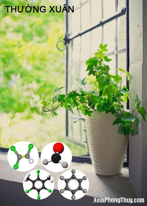 clip image016 11 loại cây giúp khử mùi sơn, lọc khí độc tốt nhất NASA khuyên trồng trong nhà