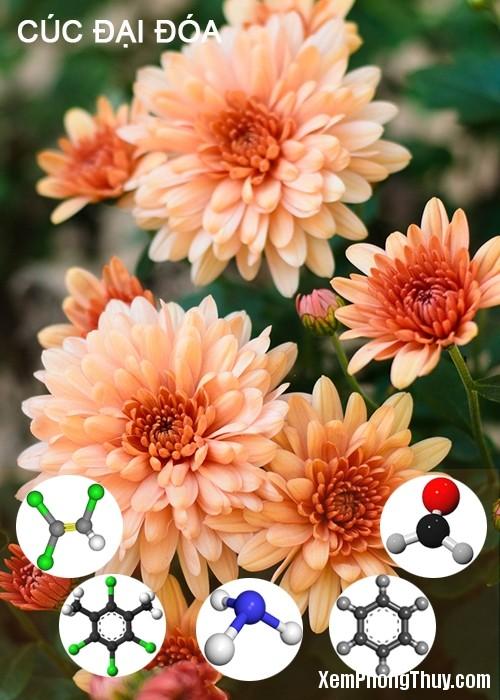 clip image018 11 loại cây giúp khử mùi sơn, lọc khí độc tốt nhất NASA khuyên trồng trong nhà