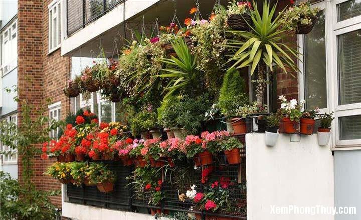 meo trong cay canh hoa giai phong thuy xau Những mẹo trồng cây cảnh hóa giải phong thủy xấu ở ban công