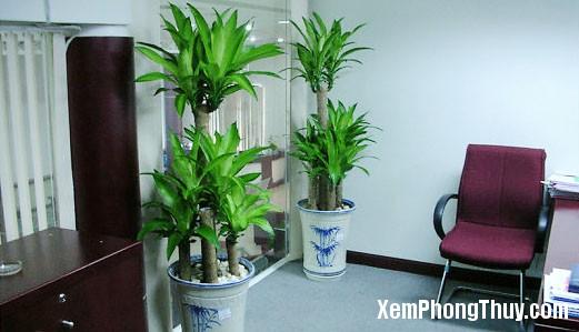 phong thuycafeland 1465904310 Những loại cây trồng trong nhà hợp phong thủy giúp tránh oi bức ngày hè