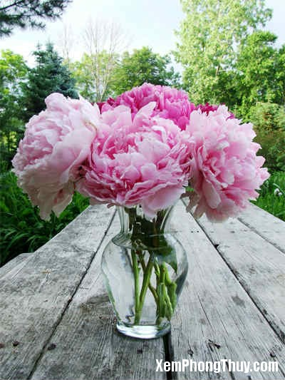 y nghia cua cac loai hoa trong phong thuy Ngỡ ngàng với ý nghĩa của các loài hoa đã quen thuộc bấy lâu