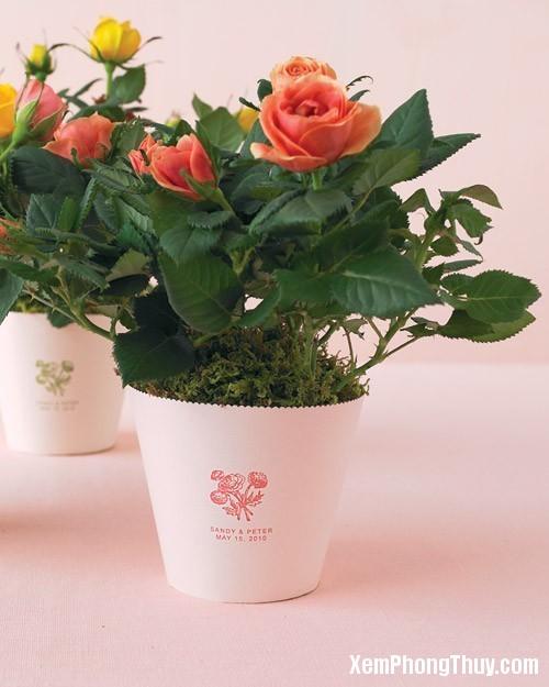 20151214080445375 Những loại hoa và cây cảnh nên và không nên bày ở trong phòng khách