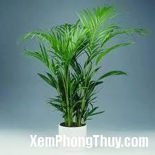 download Phong thủy cây cảnh: Làm sao để phát tài nhờ vào cây xanh?